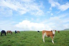 Paisaje alpestre del prado Imagen de archivo libre de regalías