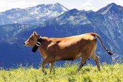 Paisaje alpestre y vaca marrón imagenes de archivo
