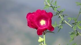 Paisaje alpino con la flor roja almacen de metraje de vídeo