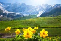 Paisaje alpino de la montaña con las flores amarillas en primero plano en día brillante soleado fotografía de archivo