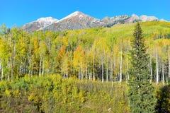 Paisaje alpino del álamo temblón amarillo y verde y de montañas nevadas durante la estación de follaje Foto de archivo libre de regalías