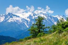 Paisaje alpino en día de primavera soleado Árbol en montañas fotografía de archivo