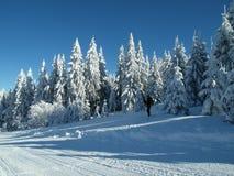 Paisaje alpino en invierno debajo de la nieve recientemente que nieva foto de archivo libre de regalías