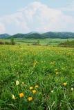 Paisaje alpino hermoso con las flores coloridas brillantes Fotografía de archivo libre de regalías