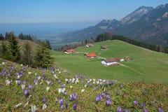 Paisaje alpino ilustrado con las cabinas y el prado del azafrán foto de archivo libre de regalías