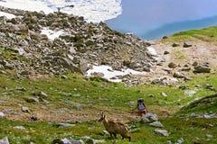 Paisaje alpino montañoso Fotos de archivo libres de regalías