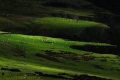 Paisaje alrededor del rastro principal justo en Irlanda del Norte, Reino Unido imagenes de archivo