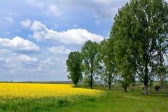 Paisaje amarillo fotos de archivo libres de regalías