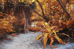 Paisaje amarillo de la selva Fotos de archivo libres de regalías