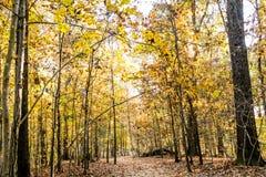 Paisaje amarillo de la temporada de otoño con el fondo de la trayectoria Imágenes de archivo libres de regalías