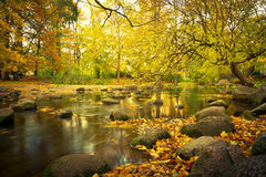 Paisaje amarillo del parque en el otoño Imágenes de archivo libres de regalías