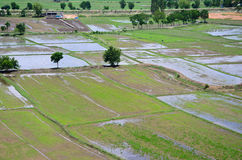 Paisaje archivado arroz visto desde arriba; kanchanaburi Tailandia fotografía de archivo