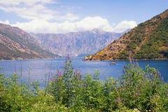 Paisaje asoleado del verano Montenegro, costa de la bahía de Kotor Imagen de archivo libre de regalías