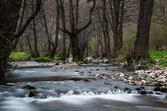 Paisaje asombroso con el río del bosque durante la primavera Cascada Foto de archivo