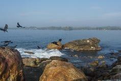 Paisaje asombroso hermoso de rocas en el océano y cuervos fotografía de archivo libre de regalías