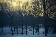 Paisaje asustadizo del vintage en el bosque Fotografía de archivo libre de regalías