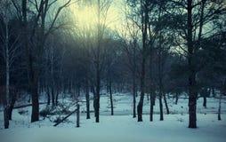 Paisaje asustadizo del vintage en el bosque Foto de archivo libre de regalías
