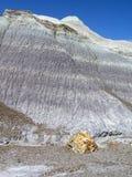 Paisaje aterrorizado de Forest National Park, Arizona, los E.E.U.U. Foto de archivo