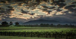 Paisaje australiano del viñedo Foto de archivo