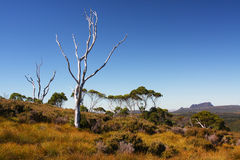 Paisaje australiano en Tasmania Fotografía de archivo libre de regalías