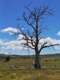 Paisaje australiano enfrente de un cielo azul Foto de archivo libre de regalías