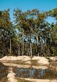 Paisaje australiano típico del contryside de los árboles de goma Imagen de archivo libre de regalías
