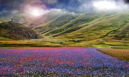 Paisaje azul de la magia del campo de flores Foto de archivo