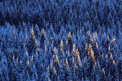 Paisaje azul del invierno, bosque del árbol de abedul con nieve, hielo y escarcha Luz rosada de la mañana antes de la salida del  Foto de archivo