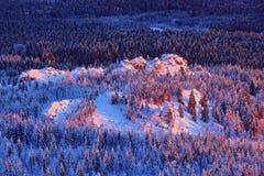 Paisaje azul del invierno, bosque del árbol de abedul con nieve, hielo y escarcha Luz rosada de la mañana antes de la salida del  Imagen de archivo libre de regalías