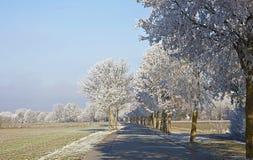 Paisaje bávaro del invierno, camino rural con los árboles helados Imagenes de archivo