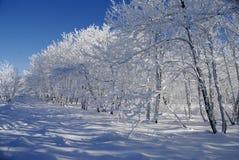 Paisaje blanco del invierno imagen de archivo libre de regalías