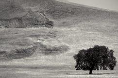 Paisaje blanco y negro con el árbol imagenes de archivo