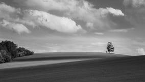 Paisaje blanco y negro con el abedul solo en el horizonte Betula Imagen de archivo
