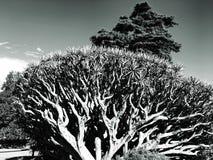 Paisaje blanco y negro de los árboles Imágenes de archivo libres de regalías