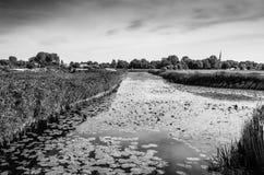 Paisaje blanco y negro del pantano Imagen de archivo