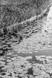 Paisaje blanco y negro del pantano Fotos de archivo