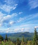 Paisaje boreal del bosque Imagen de archivo libre de regalías