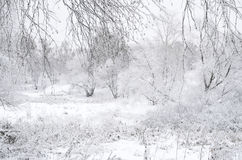 Paisaje borroso del invierno Imagenes de archivo
