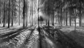 Paisaje borroso en bosque Fotos de archivo libres de regalías