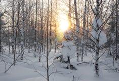 Paisaje Bosque congelado Imagen de archivo libre de regalías