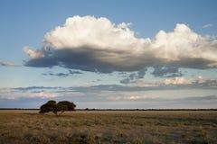 Paisaje Botswana Fotos de archivo libres de regalías