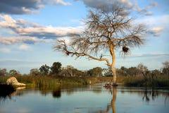 Paisaje Botswana Fotografía de archivo