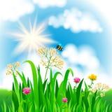 Paisaje brillante de la naturaleza con el cielo, las nubes, la hierba, las flores y la abeja libre illustration