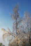 Paisaje brillante del invierno con los árboles en el bosque en la salida del sol Fotos de archivo