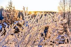 Paisaje brillante del invierno con los árboles en el bosque en la salida del sol Fotografía de archivo libre de regalías