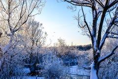 Paisaje brillante del invierno con los árboles en el bosque en la salida del sol Imagenes de archivo