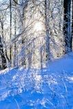 Paisaje brillante del invierno con los árboles en el bosque en la salida del sol Foto de archivo
