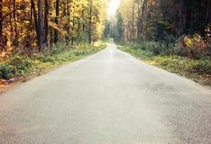 Paisaje brillante del otoño Árboles del otoño a lo largo del camino forestal Imagenes de archivo