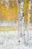 Paisaje brillante del otoño Imagen de archivo libre de regalías