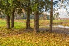 Paisaje brillante del otoño imagenes de archivo